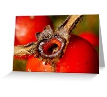 Wild Rose Hip Greeting Card