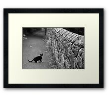 Cat in Scotland  Framed Print
