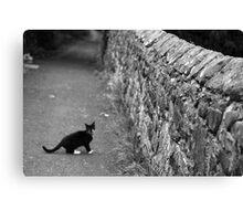 Cat in Scotland  Canvas Print