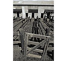 Old Shearing Shed (duotone) Photographic Print