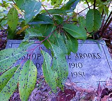 Branch Grave Artistic Photograph by Shannon Sears by twobrokesistas