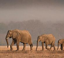 A Family Outing by Peter O'Hara