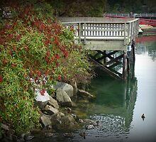 """""""Ducks Bathing"""" - Ganges Harbour, Salt Spring Island by Dawn144"""
