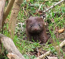 Little Mink by Veronica Schultz