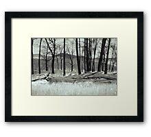 Fire Blackened Beech Trees  (duotone) Framed Print