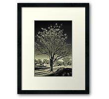 Outback Mulga tree  (duotone) Framed Print