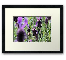 as the bee flys Framed Print