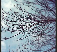 Bird ~ Branch ~  by Emma  Wertheim