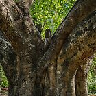 Fig Tree by Monosquid