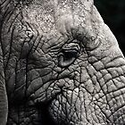 Elephant by Newhaven