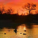 Londolozi Sunset by jozi1
