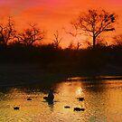 Londolozi Sunset by jozi1