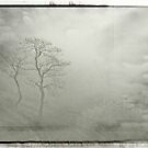Trees in the mist by Alan Robert Cooke