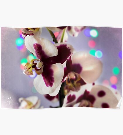 Blueberry Orchid Poster