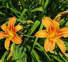 Two Orange Lilies by jojobob