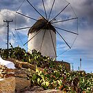 Windmill in a Pricky Pear field by Tom Gomez