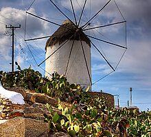 Windmill in a Pricky Pear field by Tom Gomez