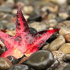 Red on the Rocks by Tracy Friesen