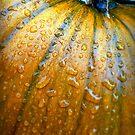 Pumpkin Pumpkin Big and Round by paintingsheep