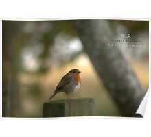""" Robin In The Winter Sunlight "" Poster"