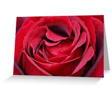 RED RED ROSE Greeting Card