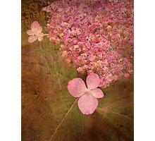 Woodland Hydrangea Photographic Print