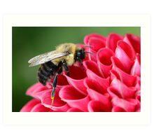 Bumblebee 1 Art Print