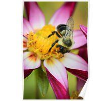 Bumblebee 2 Poster
