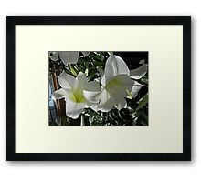 cute orchid couple Framed Print