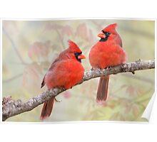 Crimson Powder Puffs Poster