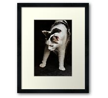 New Yoga Pose: Downward Cat! Framed Print