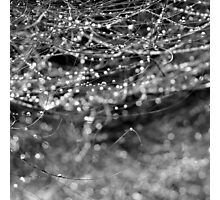 Dewdrops and Bokeh Photographic Print
