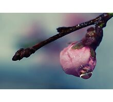 Melting Blossom Photographic Print
