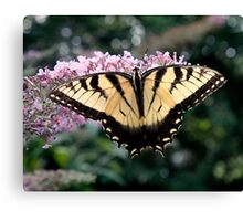 Wing Spand  Canvas Print