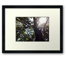 Aura Tree Artistic Photograph by Shannon Sears Framed Print