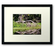 Dead Tree Down Artistic Photograph by Shannon Sears Framed Print
