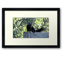Black as Night Framed Print