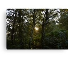 Sun Through Trees on Cannock Chase Canvas Print