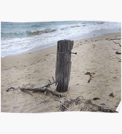 Lone stump Poster