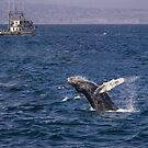 Humpback whale breaching by Celeste Mookherjee