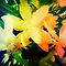 Avatar/Your Choice - Gorgeous flower Cards*