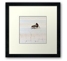 Flys Do It Too Framed Print