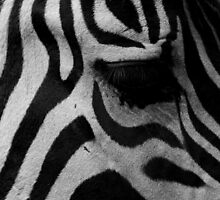 Zebra's eye by Andreas  Berheide