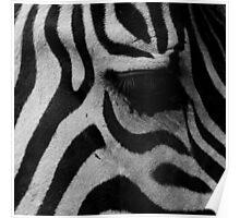 Zebra's eye Poster