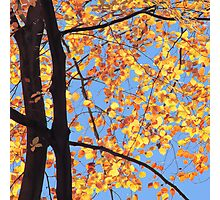 Sunlit Beeches in Autumn Photographic Print