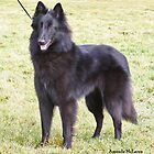 Belgian Groenendael girl by Belgian Shepherd Dog Club of QLD Inc