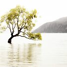 The Wanaka Tree in the Lake by Robyn Carter