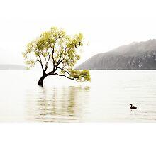 The Wanaka Tree in the Lake Photographic Print