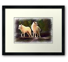 white wolves Framed Print