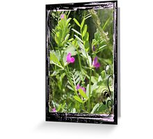 Spring Vetch Wildflower Greeting Card